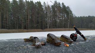 Вот это КЛЁВ ЩУКИ на БАЛАНСИР Зимняя рыбалка 2020 2021 Браславские озера