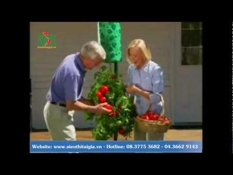 Túi trồng cây cà chua.mp4