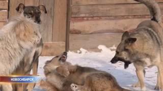 Мэрия Новосибирска судится с приютом для бездомных животных