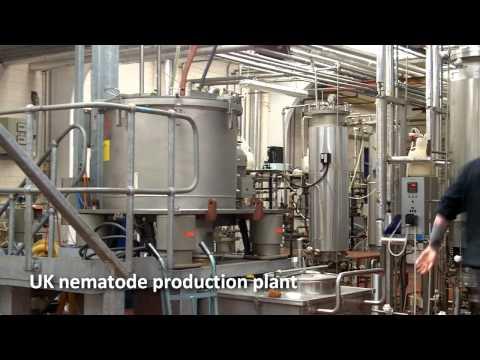 Nematodes Used in Pest Control.mp4