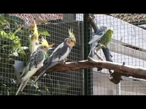 Volierebouw  dierenzaak Aduard    ( aviary building) voliere en katterennen