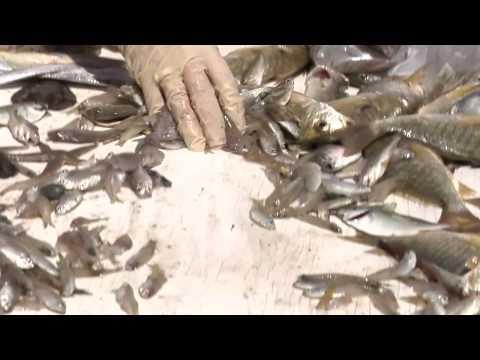 Fish Sampling near Pascagoula, MS