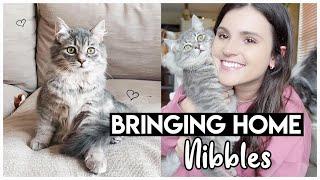 Adopting A Kitten!