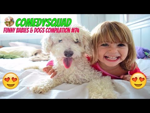 Funny Baby Laughing Hysterically at Dog Video-Funny Babies & Dogs Compilation #74