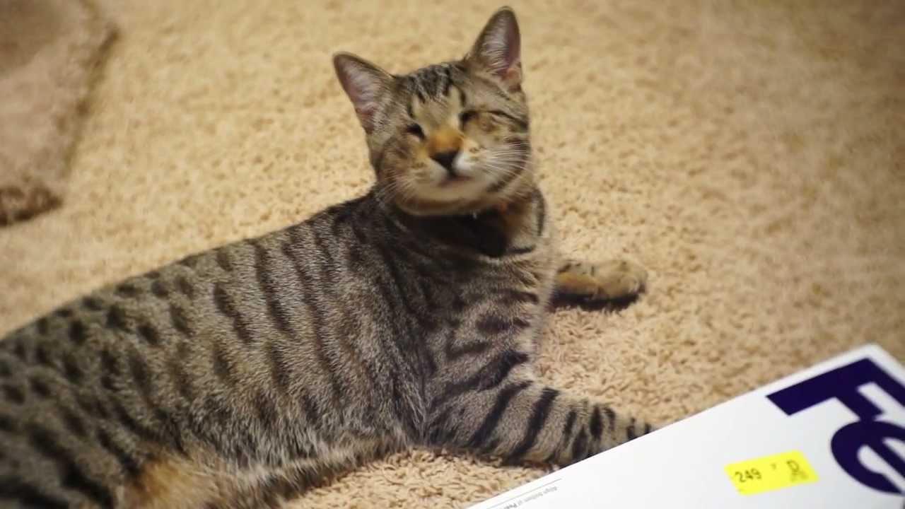 Oskar The Blind Cat Youtube