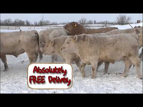2015 Absolutely FREE Bull Delivery - Canada's Bulls - M.C. Quantock 34/37