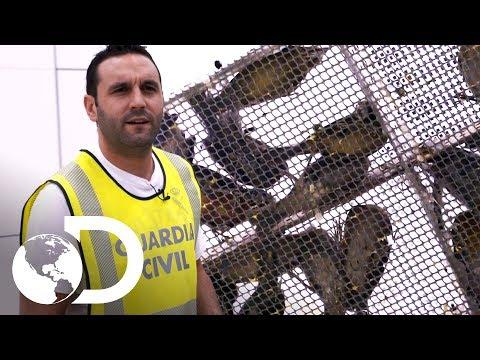 A bagagem de mão está cantando | Controle de Fronteiras | Discovery Brasil