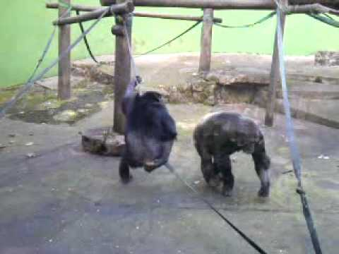 Mono comiendo su mierda