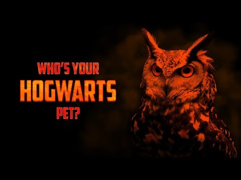 What Pet Would You Have At Hogwarts?