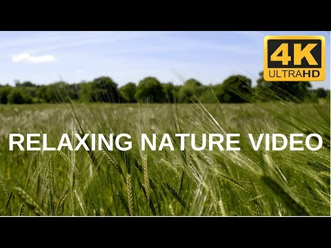 The Most Relaxing Nature  - 4K Scenery
