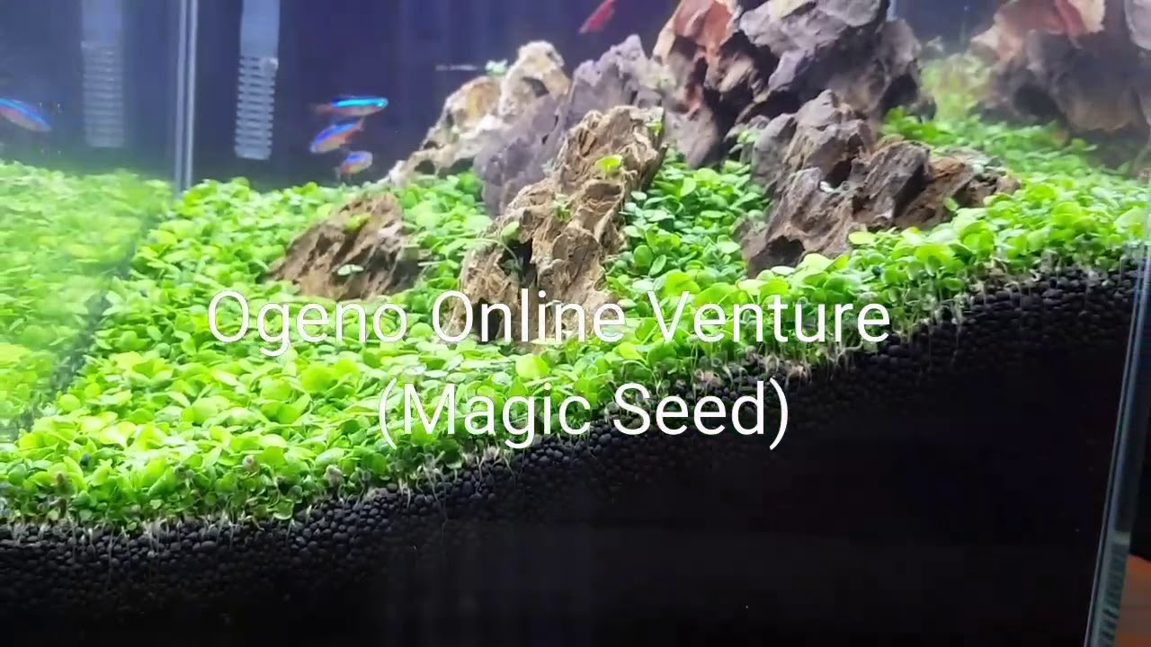 Magic Seed - Plant your tank in less than 7 days!