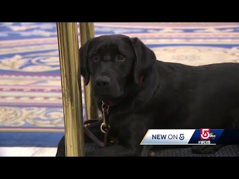 Meet The New Canine Ambassador At Fairmont Copley Plaza Hotel