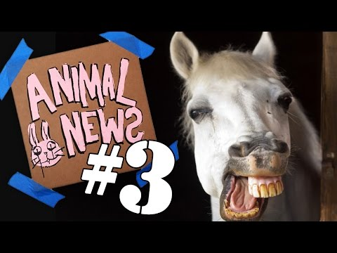 ANIMAL NEWS NETWORK #3
