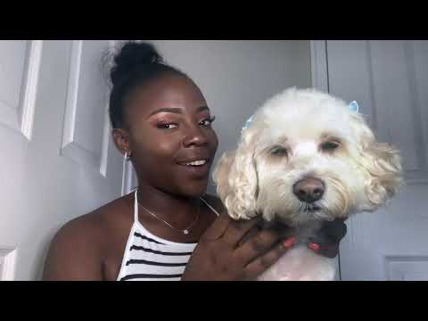My first Dog|Danidaahling|Schnoodle