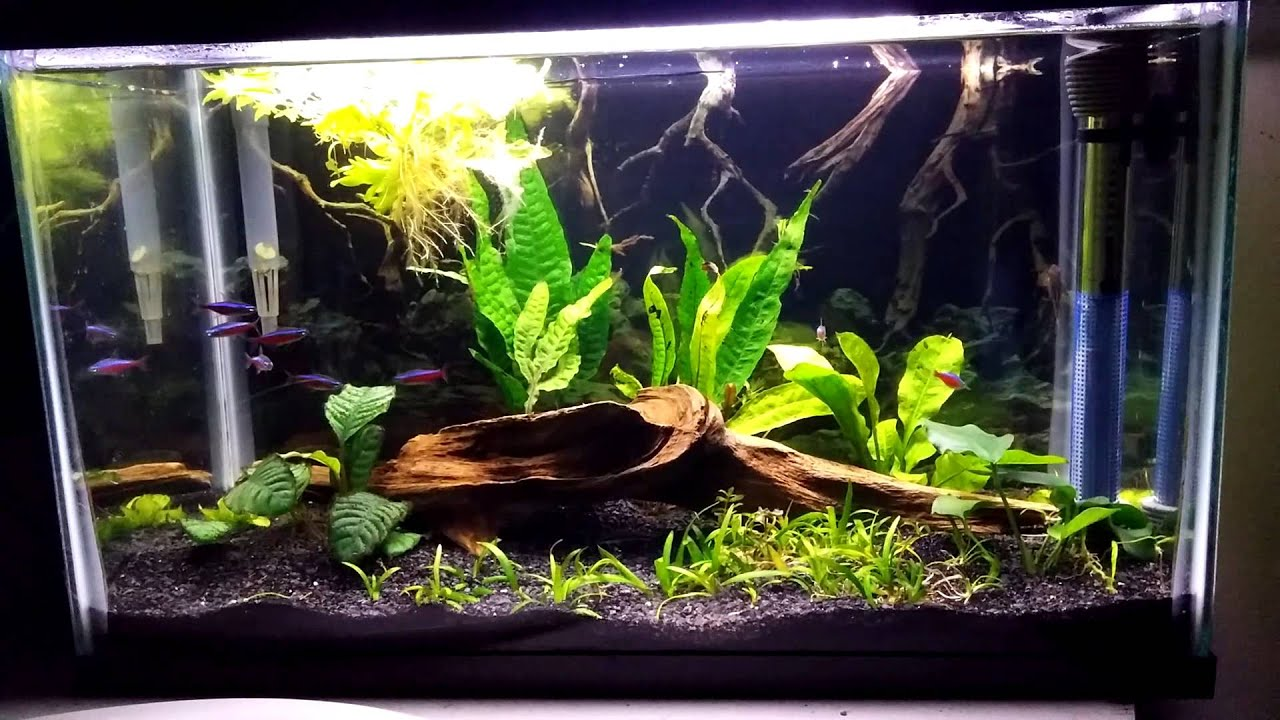 Planted 10 gallon betta community tank youtube for 2 gallon betta fish tank