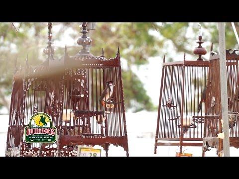 แชมป์ นกกรงหัวจุก สากล ชิงถ้วยพระราชทาน ท่ายาง เพชรบุรี