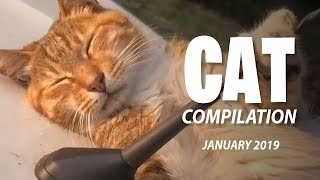 Funny Cat Compilation - Funny Animals Videos | January 2019