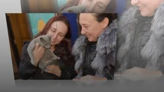перевозка животных из России в Великобританию(, 2017-04-10T23:16:50.000Z)