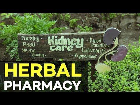Organic Farming : Nurture Pharmacy Organic Farm | Agriculture