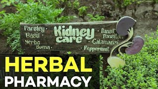 Organic Farming in the Philippines: The Nurture Pharmacy Organic Farm | #Agriculture