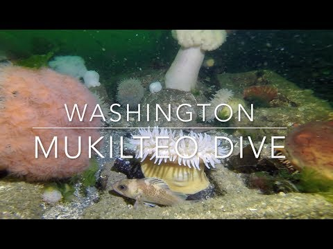 SCUBA Diving: Washington Mukilteo Dock