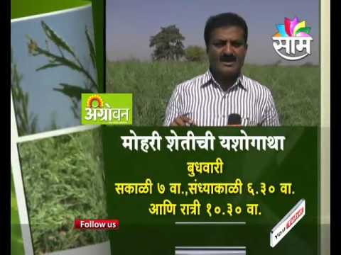 #AgroPromo : Watch Yavatmal based Jagdish Narwade's Success Story of Mustard Seed Farming