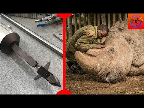 Last Male Northern White Rhino Dies & Giant Space Harpoon - 7 Days of Science