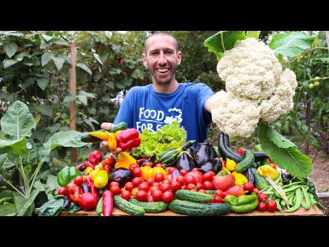 Plentiful Fall Garden Harvest, Organic Backyard Gardening in a Suburban Neighborhood