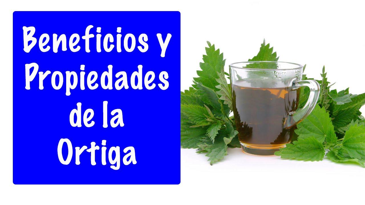 Plantas medicinales propiedades de la ortiga for Planta decorativa con propiedades medicinales