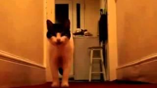 Приколы !!! Офигенно, кот может разговаривать