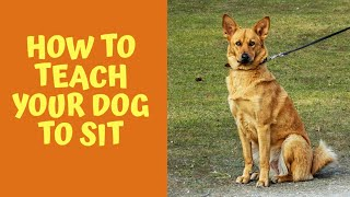 Easiest way to teach your dog how to sit