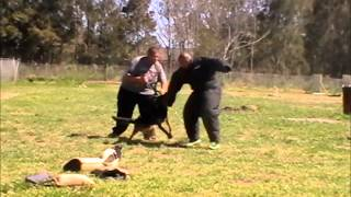 All About Dog Training - Protection & Guard Training