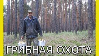 Поход за грибами.Грибная охота.Интересный сбор белых грибов.Как найти грибы в лесу
