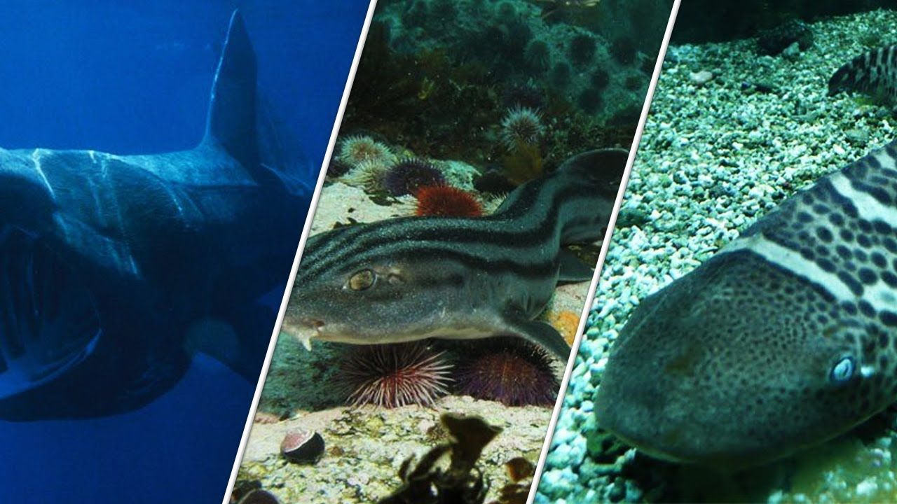 Most 20 Weird Sharks That Are Real