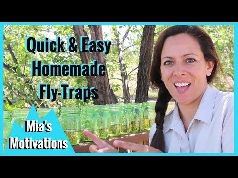 how to make your own fly trap