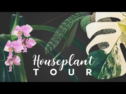 HOUSEPLANT TOUR 🌿 ● Spring 2019 | A Full Tour Of Every Plant I Own