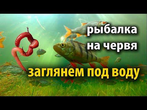Нура. Рыбалка. Подводная съёмка. Караганда 2019. Fishing. Underwater Shooting. Karaganda. Full HD.