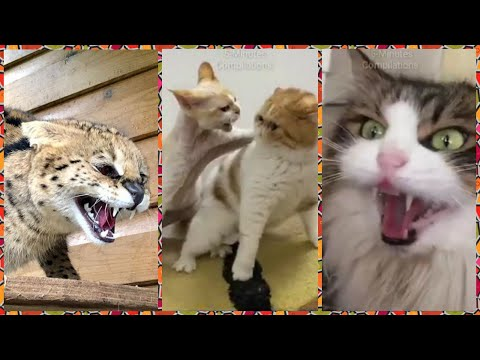 Funny Angry cats Compilation | cat hissing compilation.....animals #30
