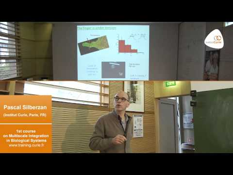 """Pascal Silberzan: """"Collective cell migration"""""""