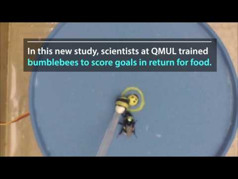Ballrolling bees reveal complex learning