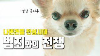 분유 훔쳐먹다 걸린 강아지 반응|전지적 강아지 시점|장…