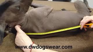 Как правильно измерить длину спины собаке