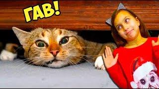 СМОТРИ ЛУЧШИЕ СМЕШНЫЕ КОТЫ и СОБАКИ! НЕ ЗАСМЕЙСЯ ЧЕЛЛЕНДЖ! Funny Cats Попробуй не смеяться Валеришка