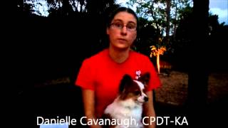 Camp Bow Wow Naples Behavior Buddies Presents: Dani's Dog Tips: Holiday Safety Tips