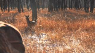Rattling At Its Best- Powder River Outfitters