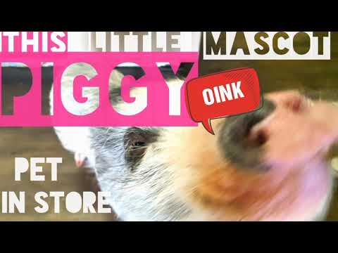 PIGGY PET IN STORE - THIS LITTLE PIGGY CAN SIT