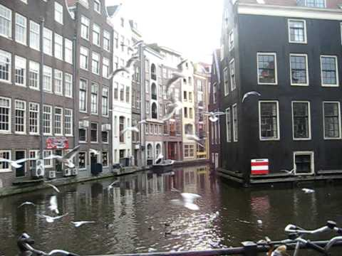 Amsterdam birds (little Venice)