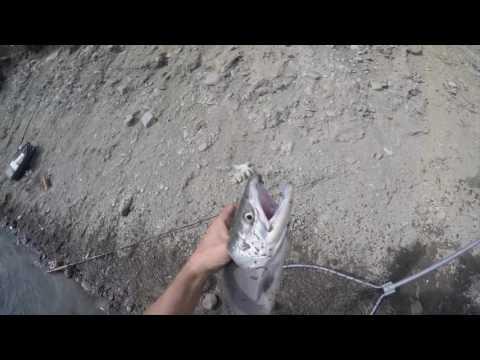 Alaska Russian River 2016 - Fish On Red Salmon