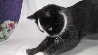 девочка Биби топаз  кошка