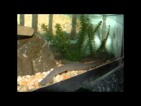 GENOME: GPCRs INCLUDE FISH OLFACTORY RECEPTORS
